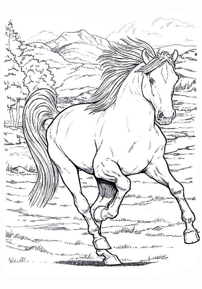 Рисунки лошадей для раскраски 025