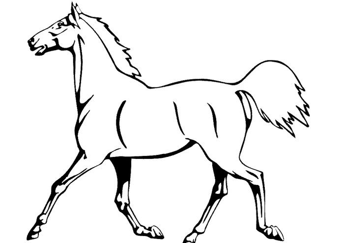 Рисунки лошадей для раскраски 029