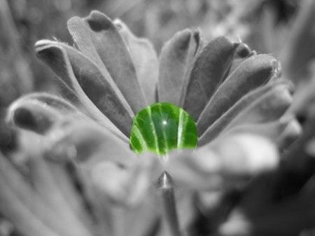 фото черно белое с цветными элементами девушки 012