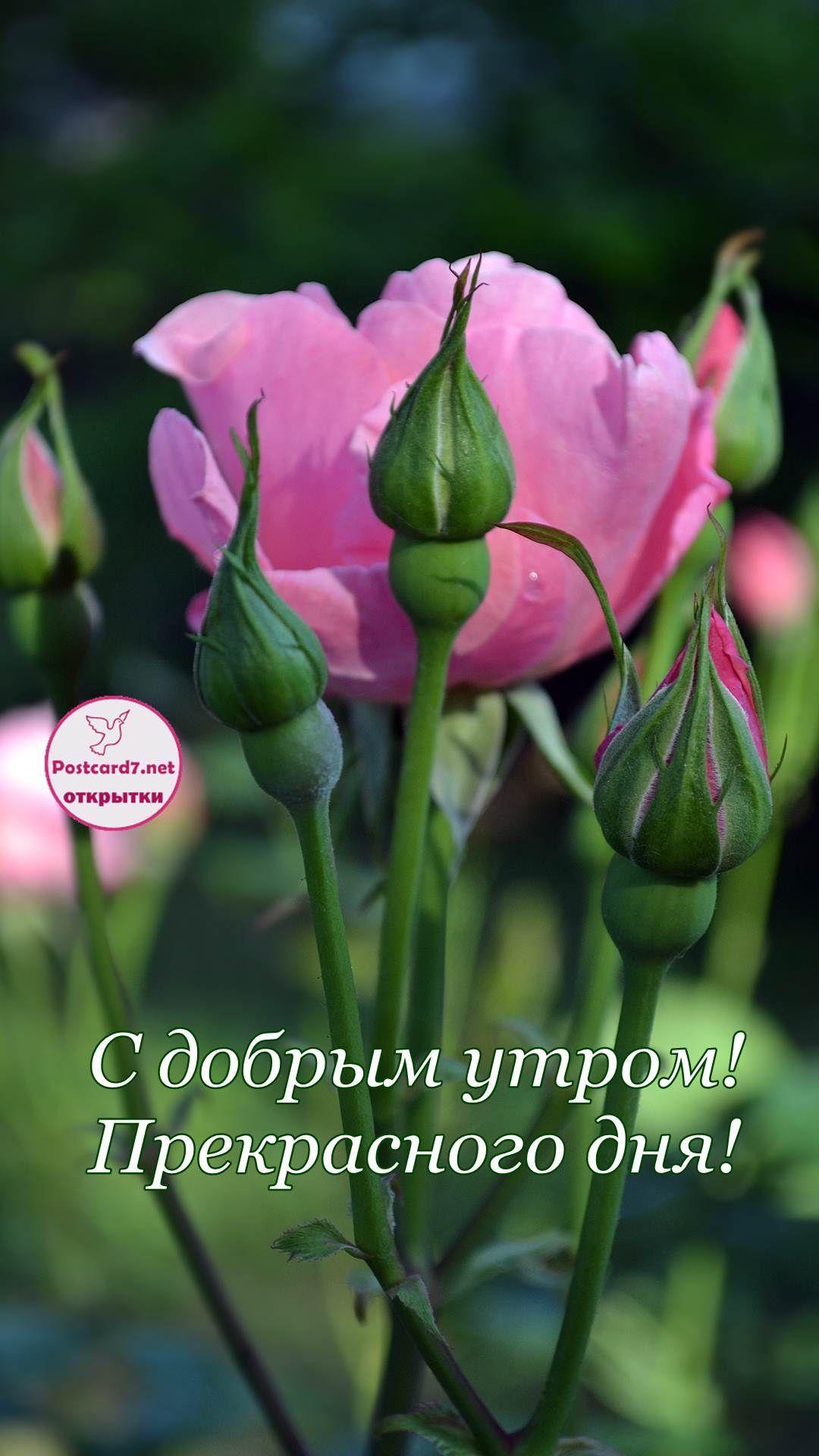 Картинки прекрасного дня и замечательного настроения 011