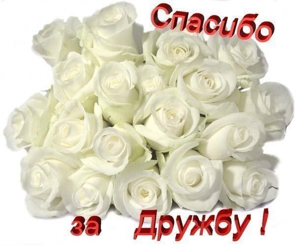 Милые открытки моим друзьям с любовью 011