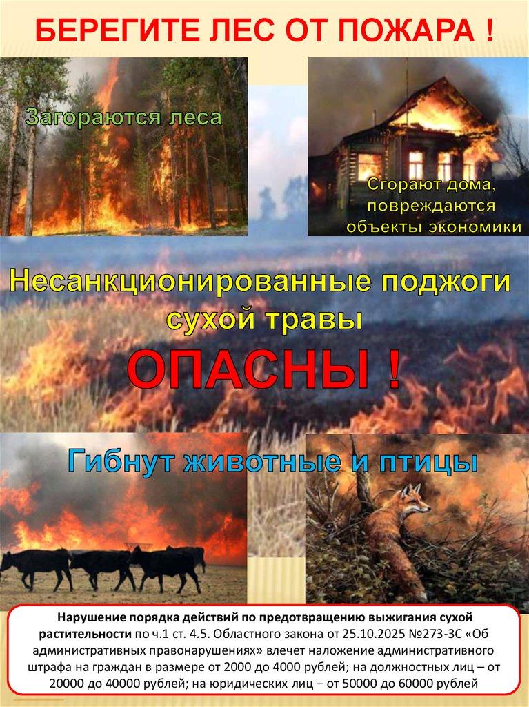 Поучительные картинки берегите лес от пожара 005