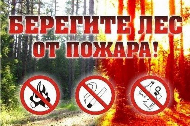Поучительные картинки берегите лес от пожара 010