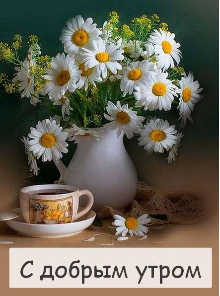 Самые красивые открытки с добрым днем