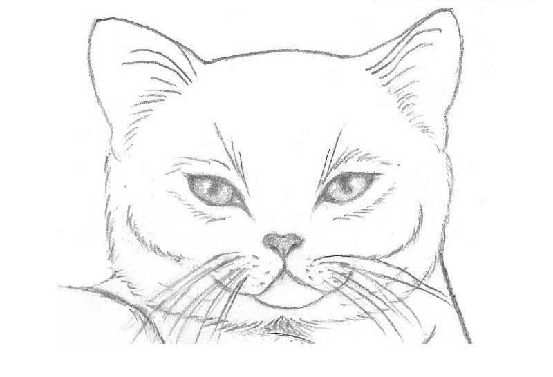 Рисунки карандашом для срисовки легко и красиво 024