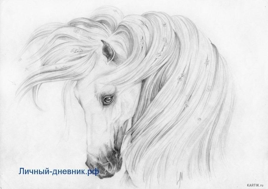 Рисунки карандашом для срисовки легко и красиво 028