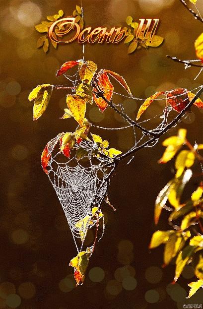 Здравствуй, осень Красивые картинки 26