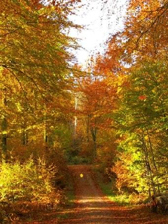 Здравствуй, осень Красивые картинки 27