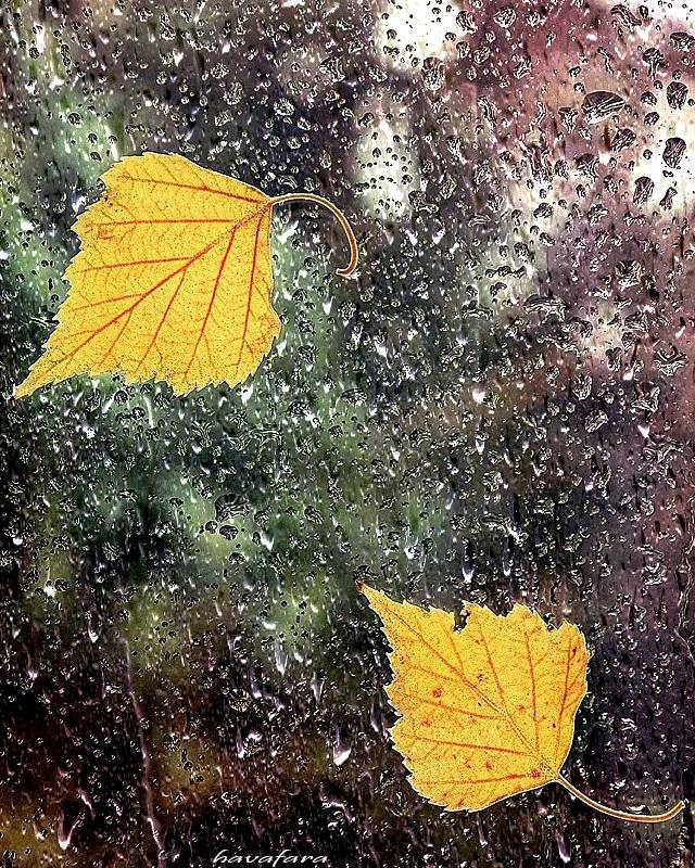 Красивая фотосессия на тему осенний дождь 01