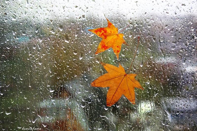 Красивая фотосессия на тему осенний дождь 03