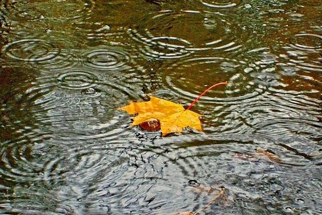 Красивая фотосессия на тему осенний дождь 09