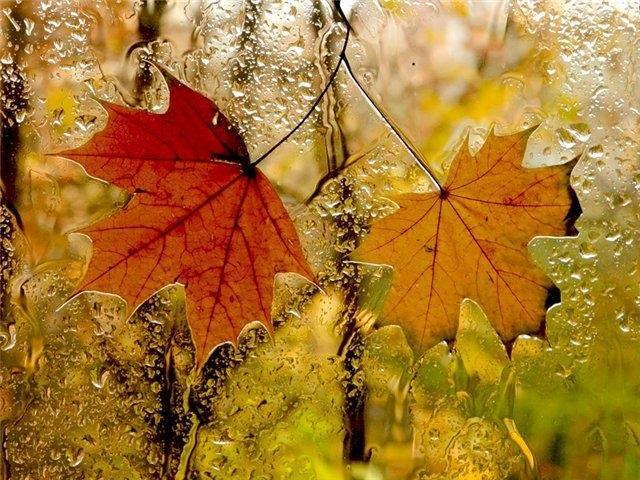 Красивая фотосессия на тему осенний дождь 13