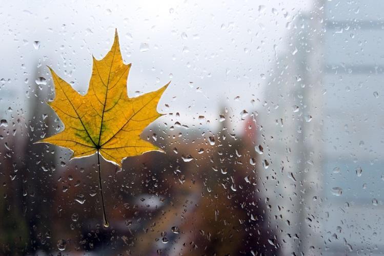 Красивая фотосессия на тему осенний дождь 17