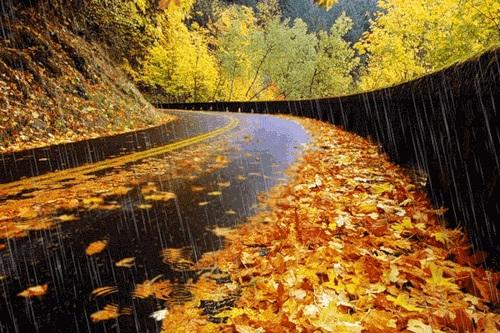 Красивая фотосессия на тему осенний дождь 19