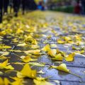 Красивая фотосессия на тему осенний дождь 24