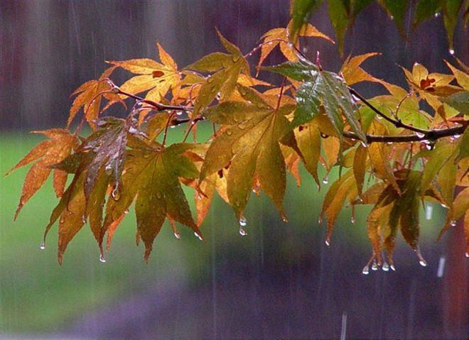 Красивая фотосессия на тему осенний дождь 26