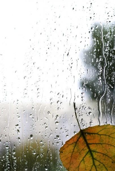 Красивая фотосессия на тему осенний дождь 27