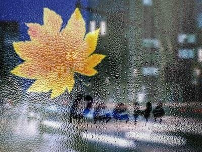 Красивая фотосессия на тему осенний дождь 28