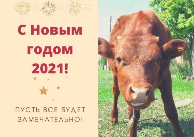 Крутые открытки на год быка 2021 01