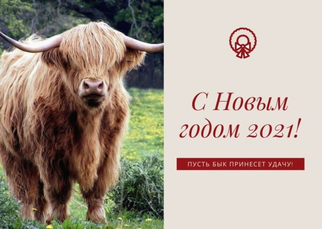 Крутые открытки на год быка 2021 08