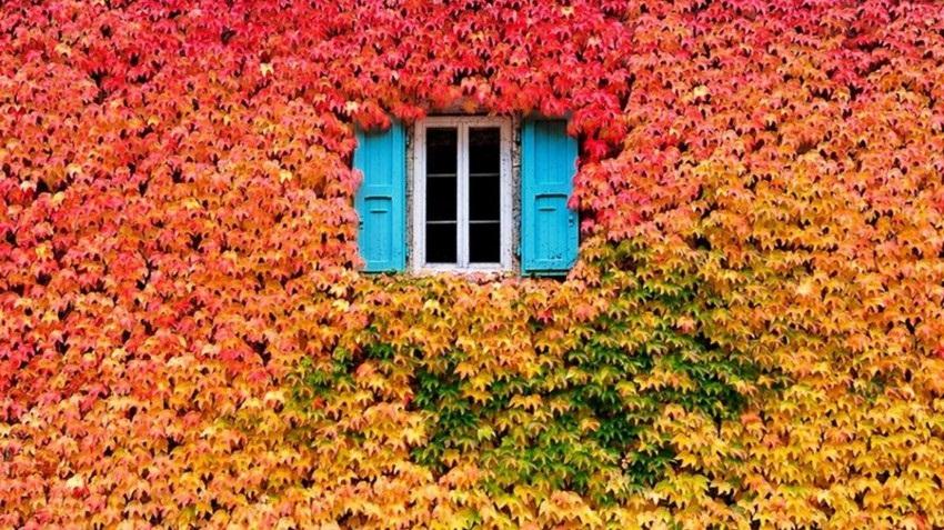 Осень ты прекрасна картинки поделки 02