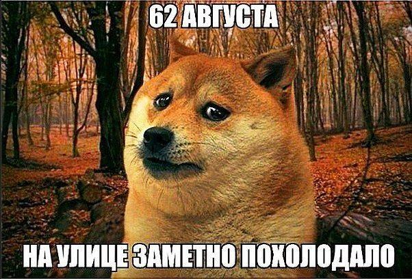 Очень смешные мемы про осень 01