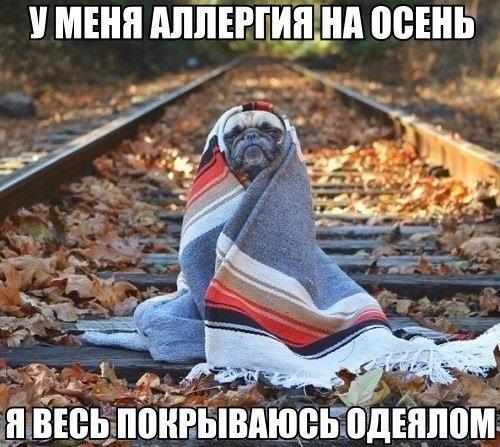 Очень смешные мемы про осень 02
