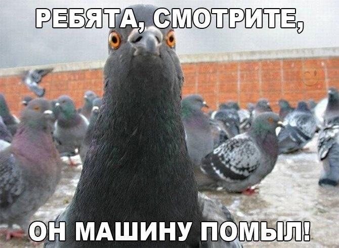 Очень смешные мемы про осень 10