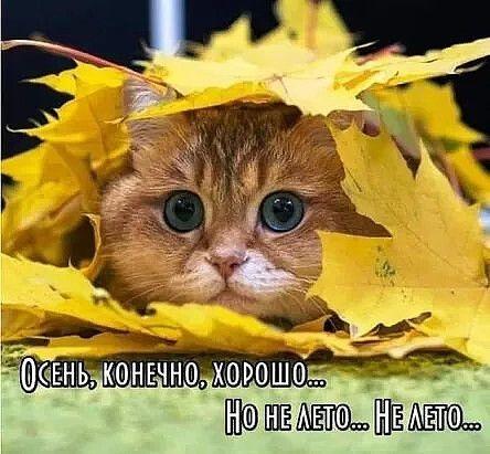 Очень смешные мемы про осень 15