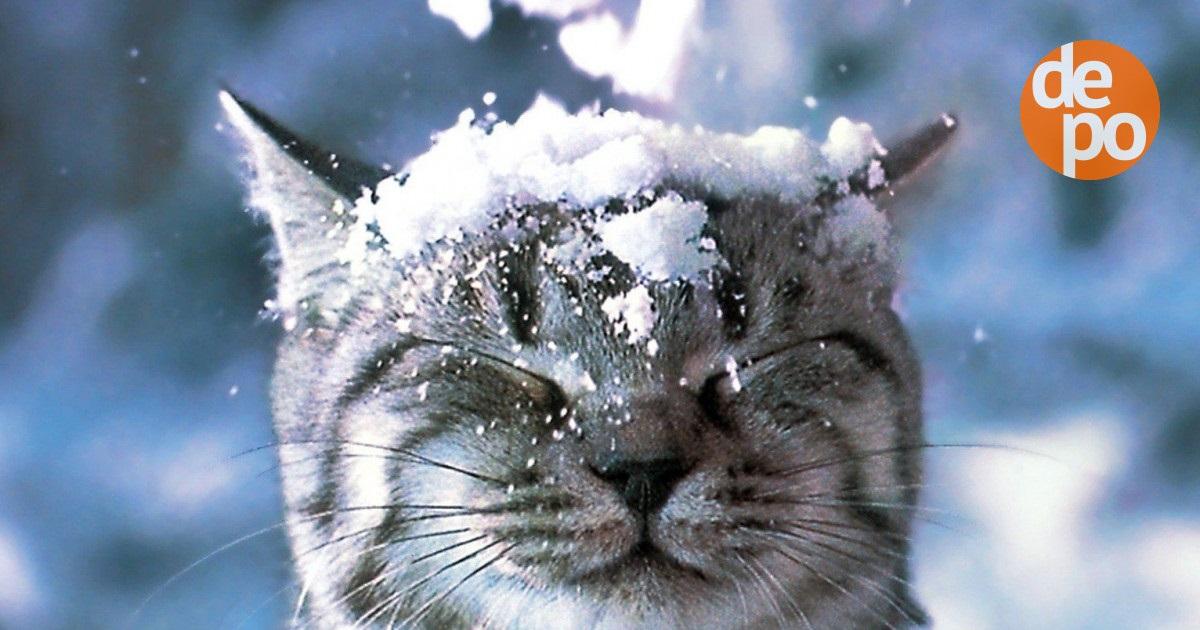 Очень смешные мемы про первый снег 15