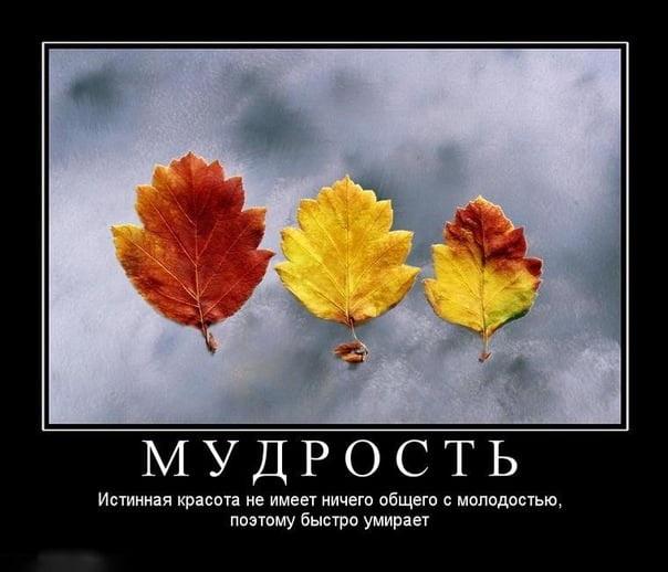 Прикольные картинки про осень с надписями 01