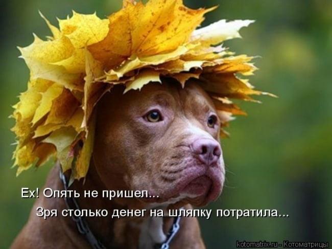 Прикольные картинки про осень с надписями 21