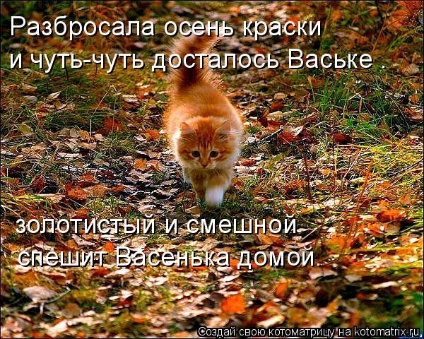 Прикольные картинки про осень с надписями 25