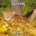 Прикольные картинки про осень с надписями 28