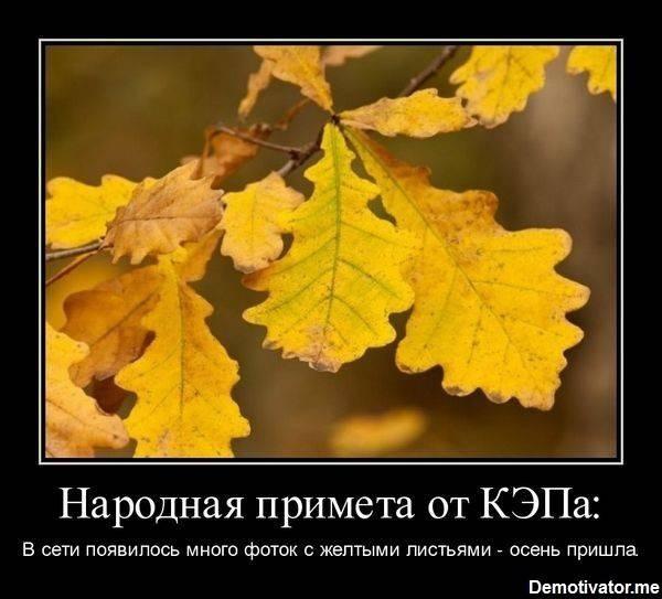 Смешные и интересные картинки про осень 14