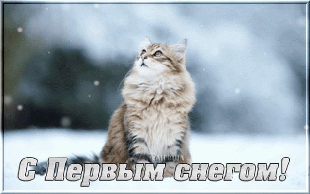 Смешные картинки приколы про первый снег 07