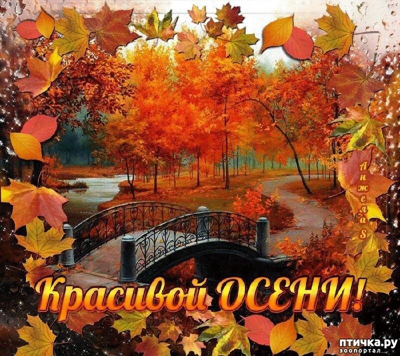 Смешные картинки про осень для личного дневника 01