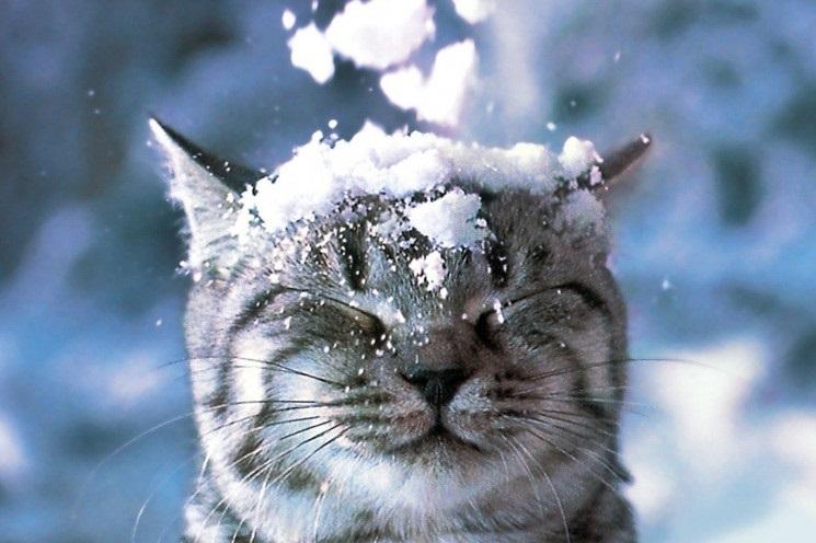 Смешные картинки с первым снегом 07