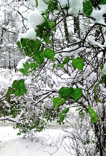 Смешные картинки с первым снегом 14