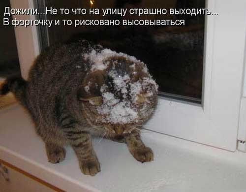 Смешные картинки с первым снегом 24