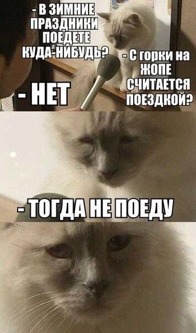 Смешные мемы про день рождения в новый год 12