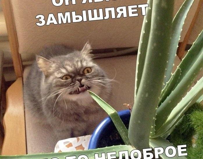 Смешные мемы про день рождения в новый год 18