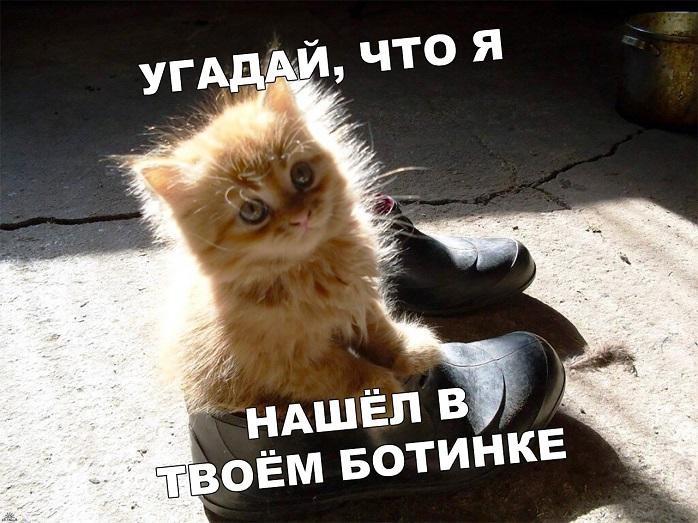 Смешные мемы про день рождения осенью 05