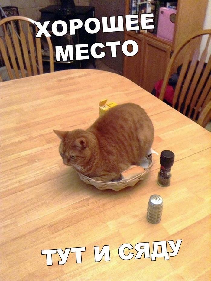Смешные мемы про день рождения осенью 06
