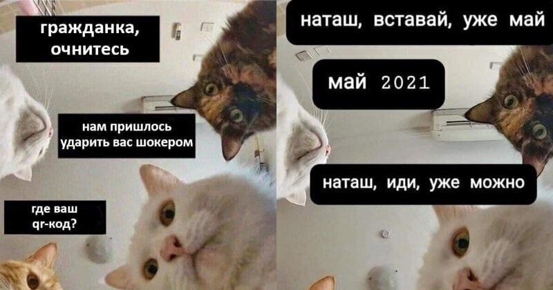 Смешные мемы про день рождения осенью 19