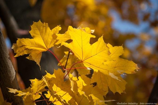 Фотографии для фотосессии осенью креативные примеры 26