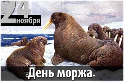День моржа 02