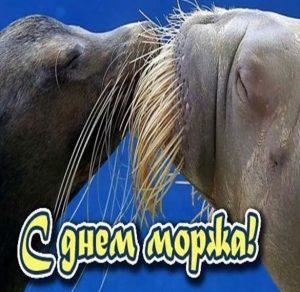 День моржа 10