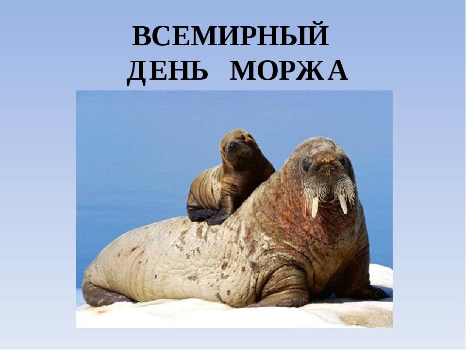 День моржа 11
