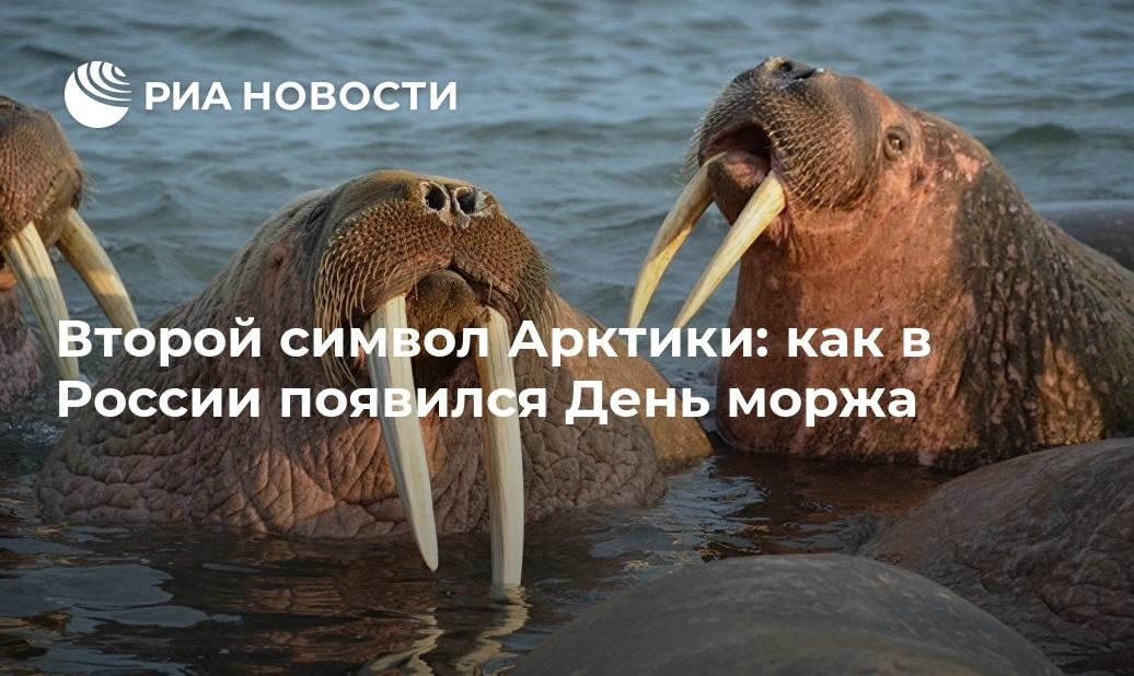 День моржа 15